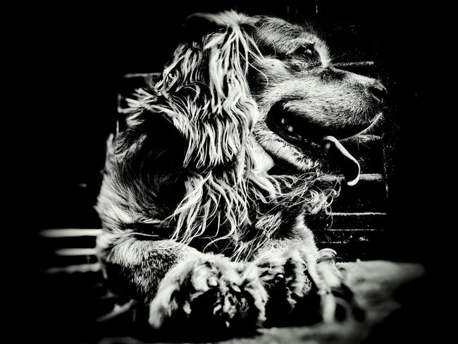 Mobilephotography Mobile Photography Mexico Mexico <3 Samsung Galaxy S4 Samsungphotography Black & White Black And White Photography Blackandwhite Photography Blackandwhitephotography Black And White Dogs Doggy Old Dogs Rule Old Dog Life Old Doggy Dogs Of EyeEm Dog Portrait Dog Of The Day Dog Photography