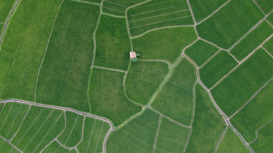 High angle view of green leaf on field