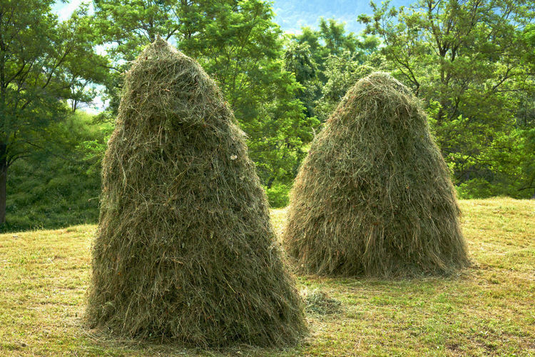 View of hay bales on field