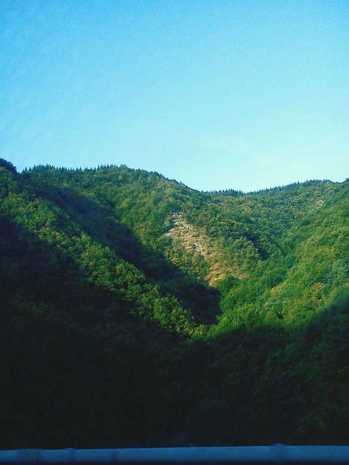 Big Forest Climbing Trees Zielony Las Contryside
