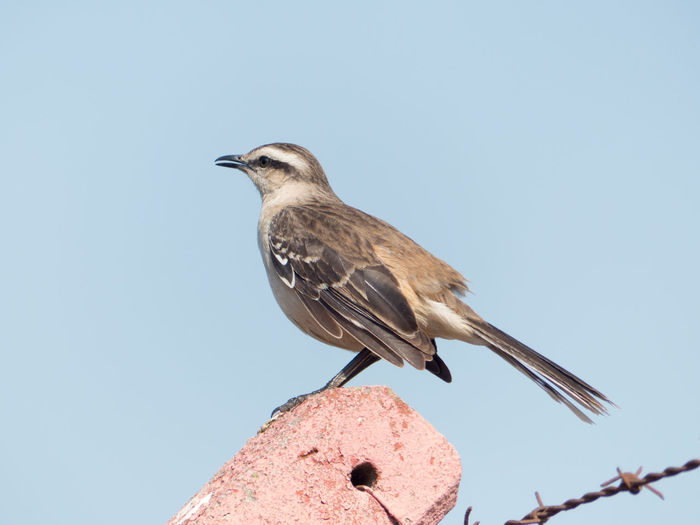 Close-up of bird perching on roof against sky