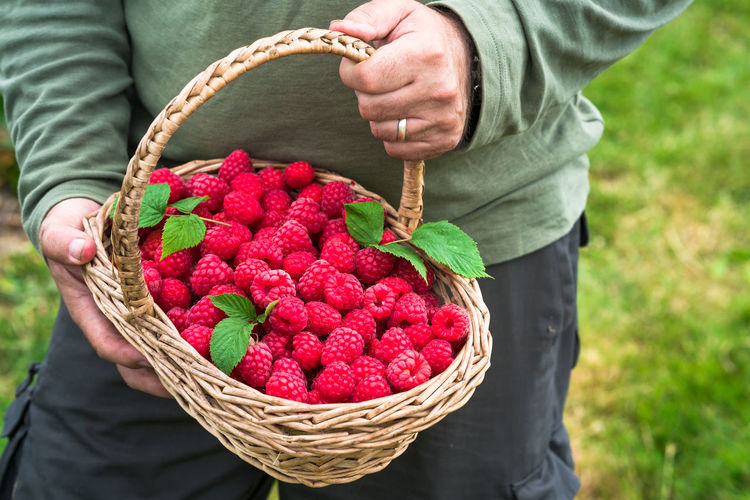 Midsection Of Man Holding Basket With Raspberries On Field