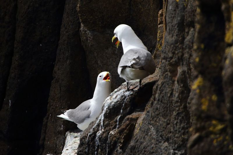 Seagull perching on tree trunk