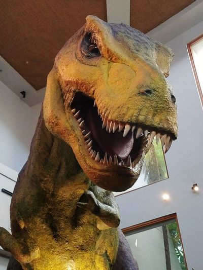 Statue Low Angle View No People Day Indoors  Close-up Animal Themes Amusement Park Travel Destinations Jurassic Park Theme Parks Island Of Adventure Indoor Photo Florida Usa Park T-rex Tristan, Tyrannosaurus Rex, Dinosaur T-rex