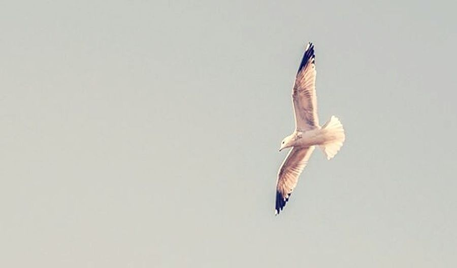 The reason birds can fly and we can't is simply because they have perfect faith, for to have faith is to have wings. - J.M. Barrie, The little white bird Freedom Bird Bird Photography Sky Light Blue Wings Faith Flying Inspiration Quotes