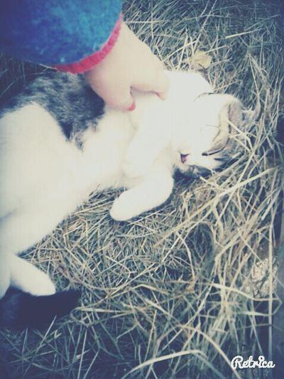 Cat♡ One Fine Day