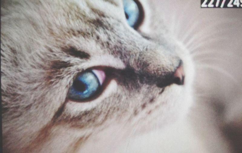 my cat!♥️