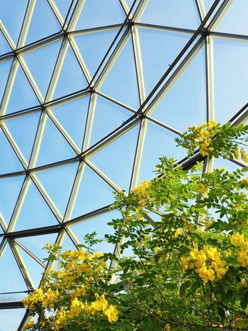 Inside Close-up No People Growth Sky Nature Low Angle View Yellow Arrow Tree Lookingup Plants Round Shape Curve Windows Glass Botanical Garden Botany EyeEm Best Shots Minimalism From My Point Of View Clear Sky Autumn Triangles Yellow Modern Architecture