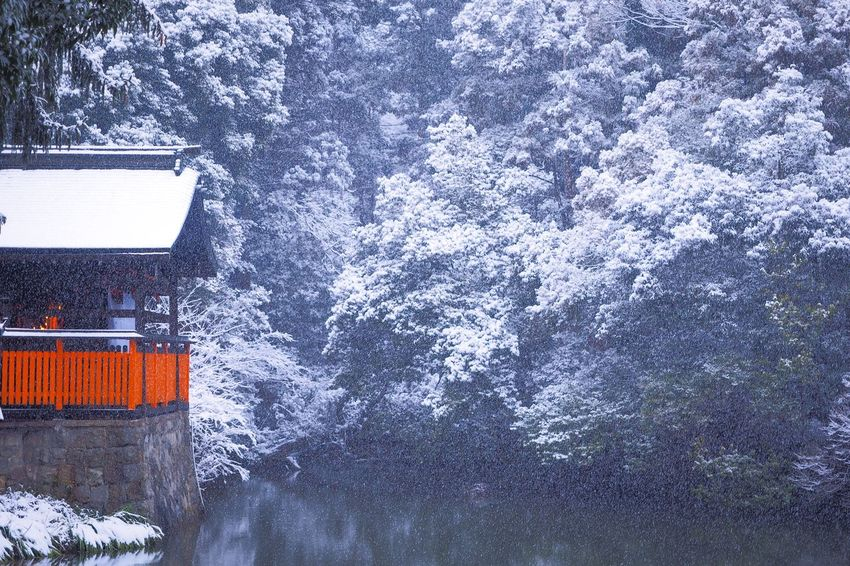 Kyoto Snow Snow ❄ Shrine Japanese Shrine