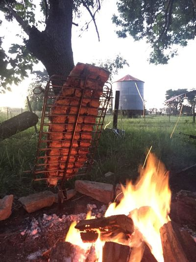 Costillar asado al asador / grilled beef ribs on a stake in countryside argentina pampa slow cooking South America Patagonia Buenos Aires Argentina Pampa Fire Pit Costillar Beef Ribs Ribs Beef Barbecue Grill Stake Asador Criollo Asador Asado Argentino Asado Fire Burning Flame Fire - Natural Phenomenon Heat - Temperature Tree Plant Wood - Material No People Firewood Day Wood Outdoors Fireplace