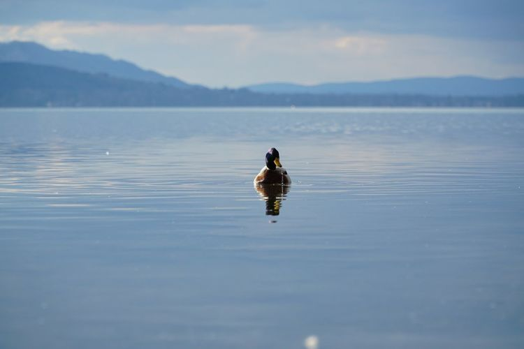 Bird swimming in lake against sky