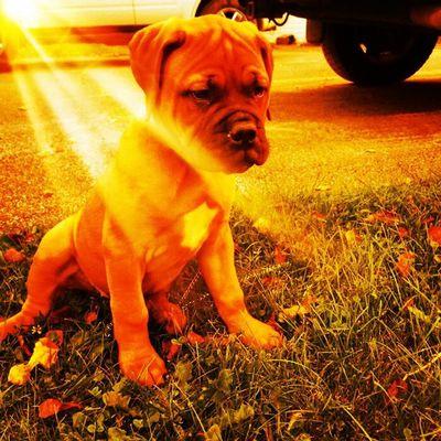 Meet Meg-a-Roo, our bundle of sunshine