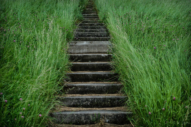 stairs to ...?? Way Up Freshness Go Gras  Green Color Growth Hamburg Nature On The Way Open Edit Stairs Steps The Week On EyeEm Urban Nature Eye4photography  Fragility Grassy Natur Nikonphotographer Nikonphotography Outdoor Outdoor Photography Outdoors The Way Forward Treppe