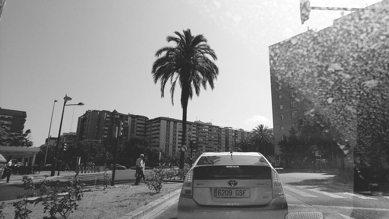 tree, tropical climate, car, palm tree, building exterior, mode of transportation, motor vehicle, city, architecture, land vehicle, sky, transportation, built structure, street, plant, nature, day, road, clear sky, outdoors