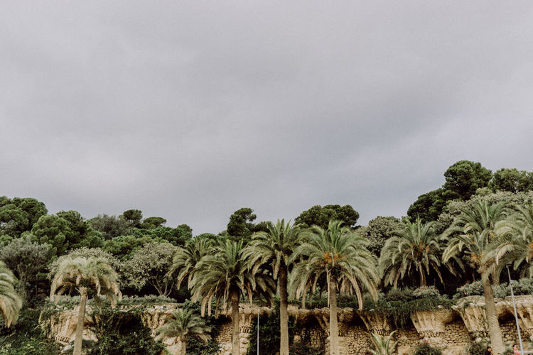 Barcelona EyeEm Best Shots EyeEm Nature Lover Green Nature Palm Palm Tree Park Guell Plants Travel Tree Wall Built Structure Cloud - Sky Eye4photography  Nature_collection No People Outdoors Sky Travel Destinations Urban Urban Landscape
