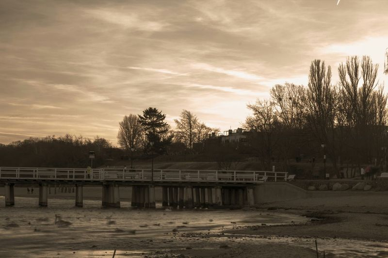 Sepia Clouds And Sky Trees Eyem Best Shots Seagulls Beach Nature Nature_collection Baltic Sea Landscape