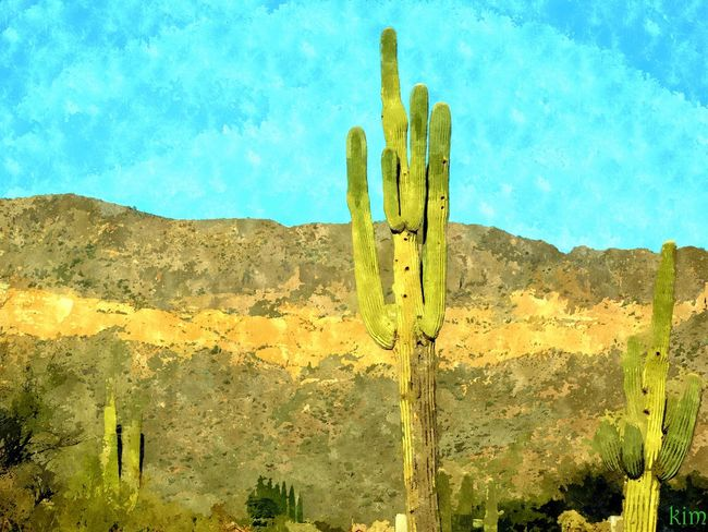 Beauty In Nature Cactus Day Desert Growth Landscape Nature No People Outdoors Plant Saguaro Cactus Scenics Tranquil Scene Tranquility