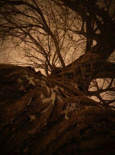 Creepy tree on a snowy night Creepy Tree A Barren Tree Plants And Trees Trees