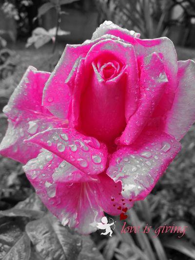 EyeEm Nature Lover Rosé Love ♥ First Eyeem Photo Garden Adana Turkey
