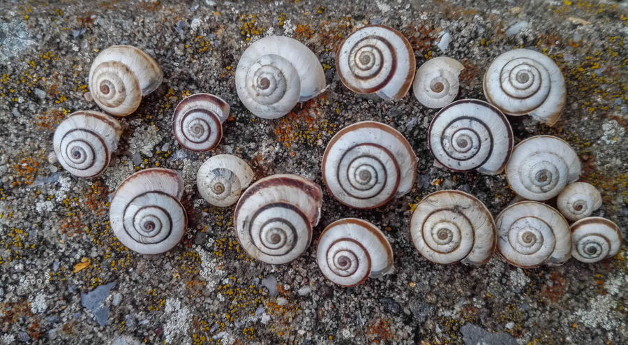 Rusty Abandoned Messy Deterioration Close-up Obsolete Dirt Damaged Abundance Day Outdoors No People Weathered Large Group Of Objects Stone Fragility Full Frame Nature Snail🐌 Snail ❤ Snails🐌 Snails Shells🐚 Shell Huawei
