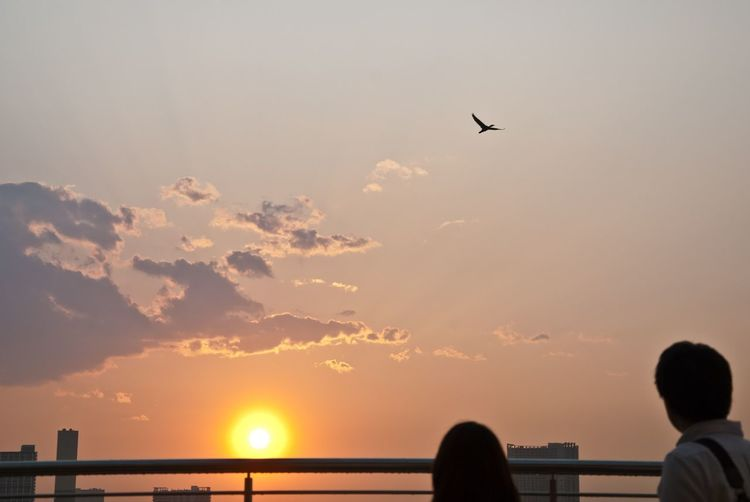 Japan Bird Flying Looking Outdoors People Real People Silhouette Sky Sunset