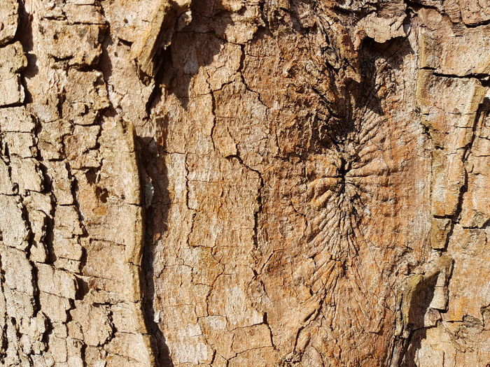 Nature Tree Light And Shadow Tree Bark Wood Bark Rough Backgrounds Full Frame Textured  Sunlight Pattern Rough Cracked Close-up Worn Out