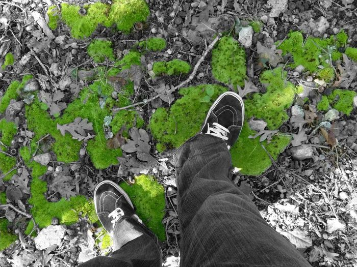 Low Section Person Standing Shoe Personal Perspective Jeans Men Footwear High Angle View Green Denim Moss Human Foot Casual Clothing Field Adult Green Color Day Outdoors Nature vans