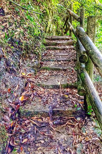 Creekside Trail Manmade Structure Mountains And Valleys Walkway For I Grew Up The Mountains Nature_perfection Upahead A Glass Of Lemonade Japan Photography InKaratsu