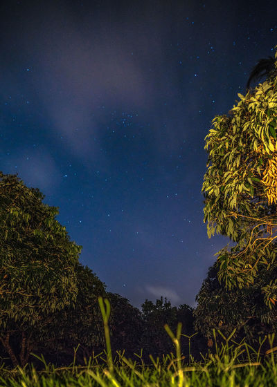 Astronomy Beauty In Nature Constellation Galaxy Growth Landscape Landscape_Collection Low Angle View Nature Nature Nature Photography Nature_collection Night Nightphotography No People Outdoors Scenics Sky Sky_collection Star - Space Star Field Sunset_collection Tranquil Scene Tranquility Tree Capture Tomorrow