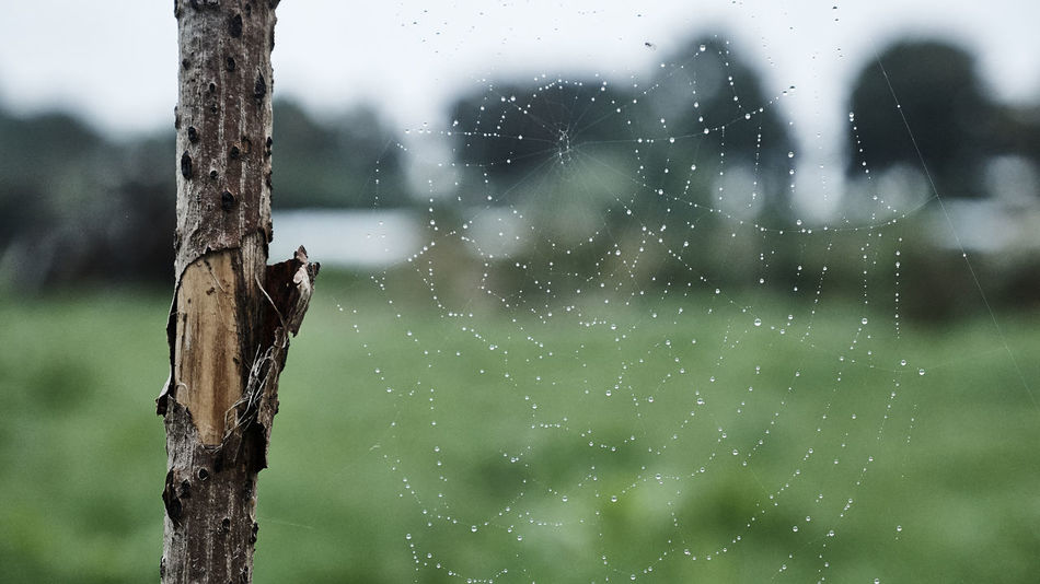 Morningdew MorningDewdrops Spider Web Travel Travel Destinations Travel Photography Traveling Waterdrops On Spiderweb