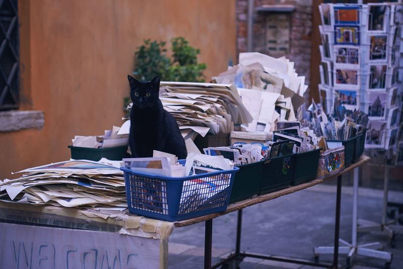 Black cat sitting in front of the entrance of the Liberia Aqua Alta in Venice. Black Cat Books La Dolce Vita Animal Themes Antiques Aqua Alta Cat Day Italy Market No People Old Times Outdoors Postcards Retail  Sitting Venice Vintage
