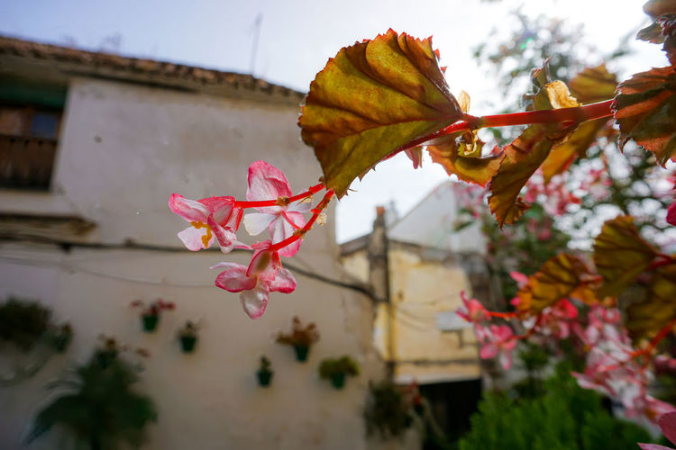 Low angle view of flowering plant during autumn