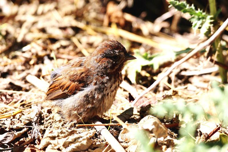 Close-up of a bird in a field