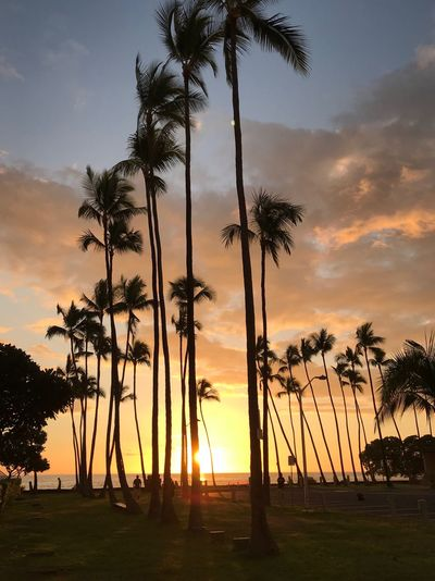 Palms Sunrise_sunsets_aroundworld Big Island Hawaii Sunset Silhouettes Silhouette Palm Tree Sky Tree Sunset Plant Palm Tree Beauty In Nature Silhouette Tropical Climate Tranquil Scene Scenics - Nature Tranquility