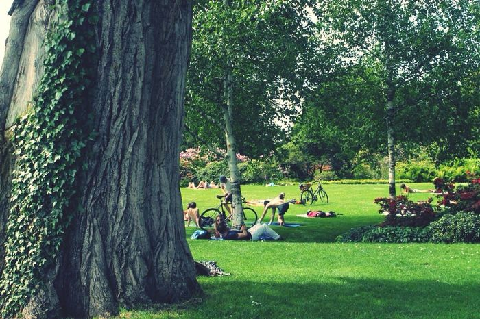 Beautiful Zürich Chinagarten Park