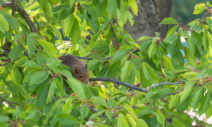 View of bird on tree