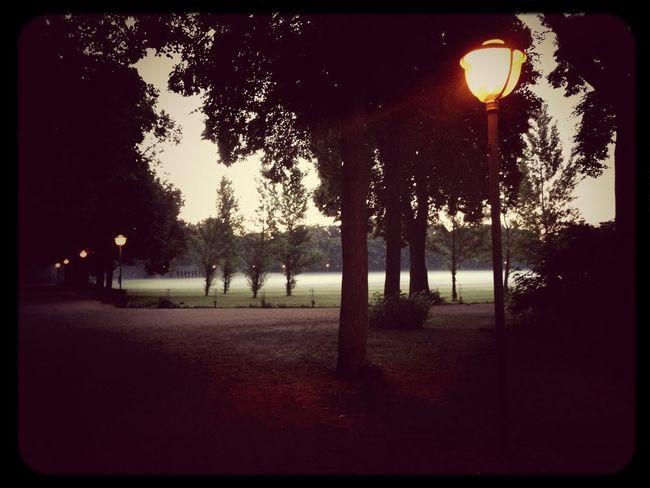 Fog Foggy Morning Berlin