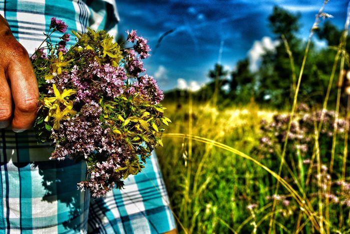 Meadow Meadow Flowers Healing Herbs Summer Blue Sky Hand
