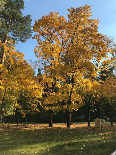 The colors of autumn which let us enjoy the last warm days Beatiful Nature Beauty In Nature Beatyful Nature Золотая осень Tree Plant Sky No People Nature Beauty In Nature Growth Outdoors Sunlight Scenics - Nature Park Yellow