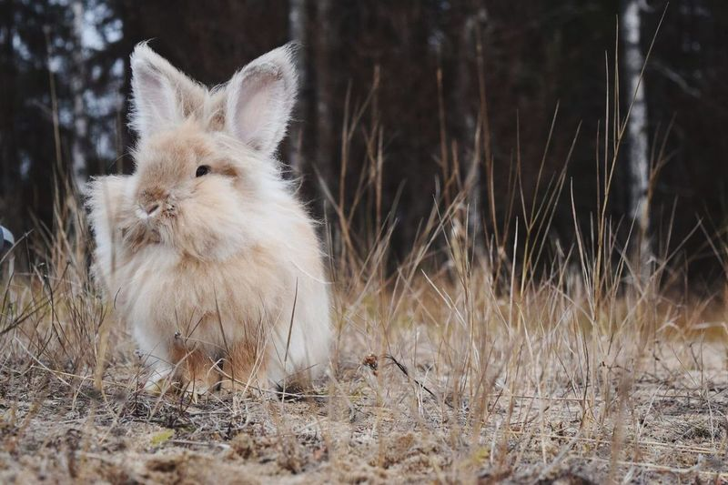 Animal Themes Mammal One Animal Domestic Animals Pets No People Field Grass Day Outdoors Nature Close-up Rabbit Check This Out