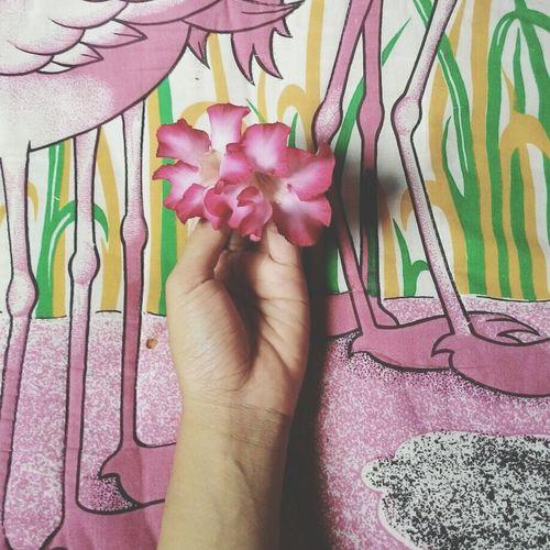Flowers Love Pink Flower Happy Life