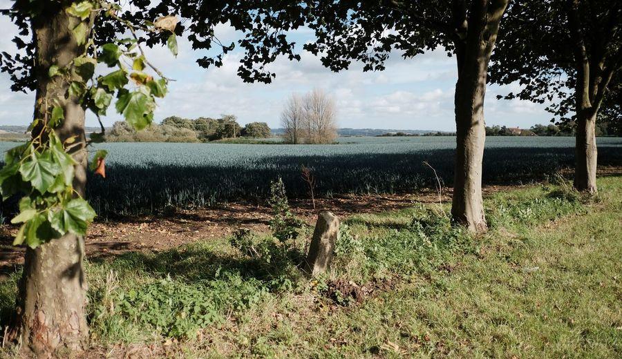 Lincolnshire Leeks Fields Fieldscape Wolds Raithby Partney Spilsby Xpro2 Fujifilm_xseries