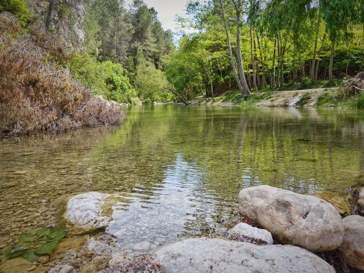 Water Nature Outdoors Tree Lake No People Day Beauty In Nature Tranquility Rural Scene Barranc De L'encantada Landscape Spring Is In The Air Reflection River Spring Photography Source Of Water Beauty In Nature Tranquil Scene Fragility Freshness Nature Source Of Life Spring 2017 Tranquility Place Of Heart