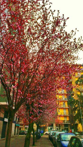 Flowers Urban Nature Spring