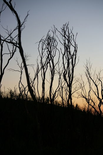 Burnt Trees Bush Fire Sunset_collection Sunset Silhouettes