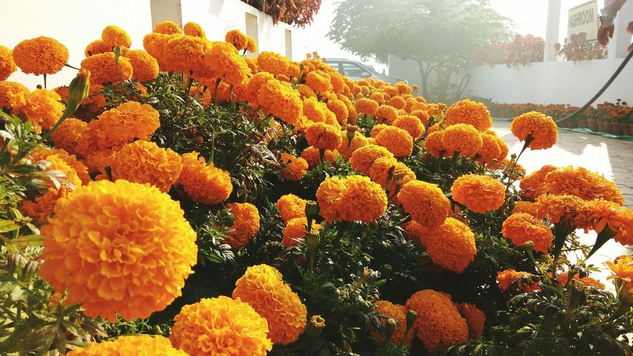 Cheetal Grand Roorkee Morning Photography Freshness Nature Flower Beauty In Nature Outdoors Sunshine Bright