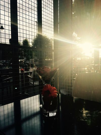 Reflection Sun Indoors  Day Art Is Everywhere Sunlight Antwerpen Belgium Cafe Weekend Flowers