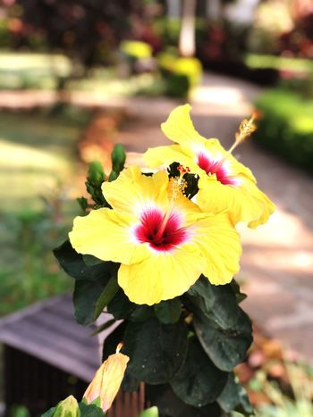 Flower Fragility Nature Petal Freshness Focus On Foreground Beauty In Nature