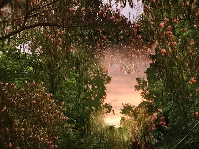 Sunset just after a rainstorm Tree Nature Growth Beauty In Nature No People Outdoors Water Plant Tranquility Day Scenics Flower Branch Freshness Sky rain storm EyeEmNewHere