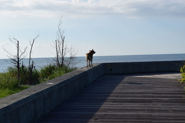 Dog standing on retaining wall by sea against sky